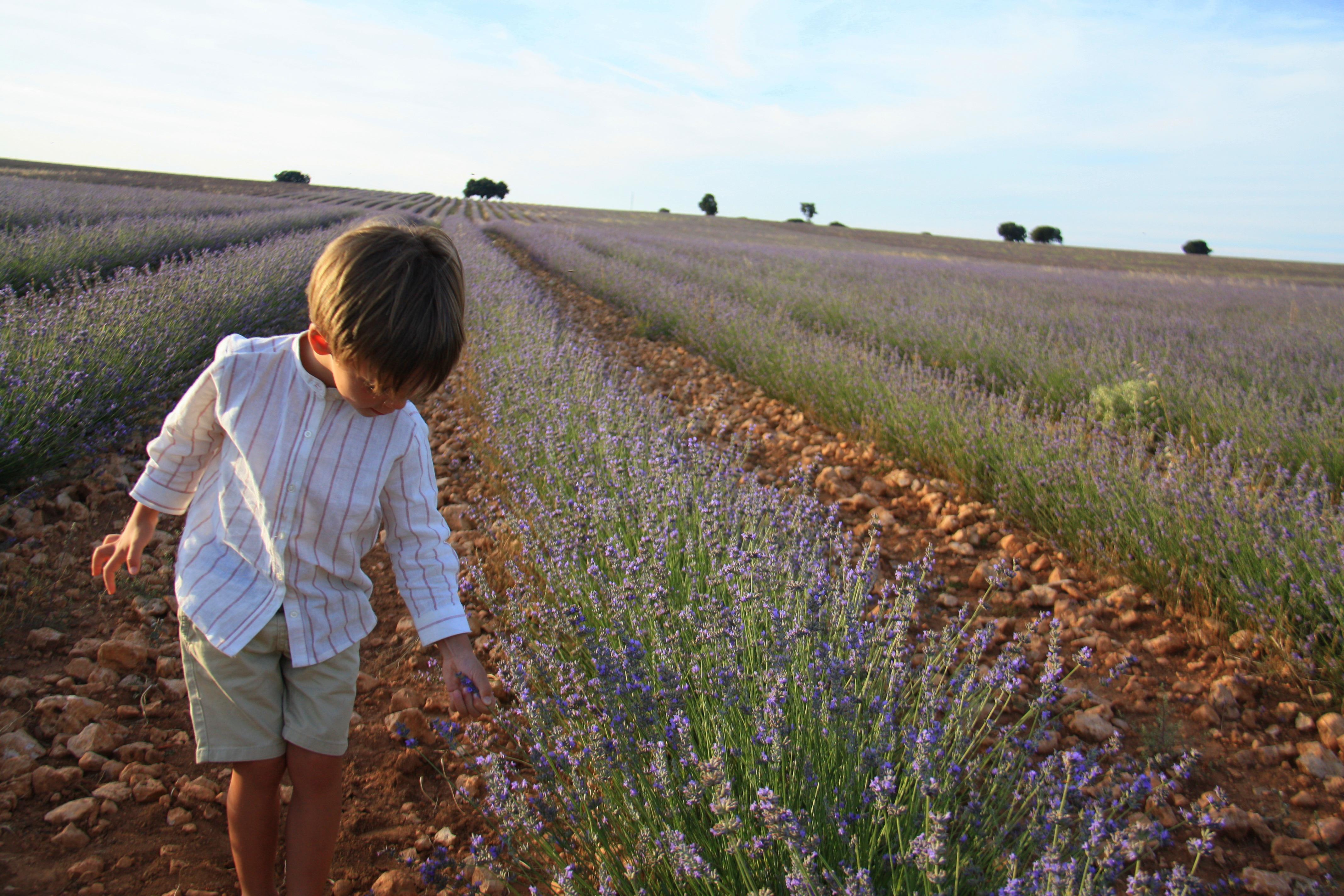 En Brihuega, La Alcarria, campos de lavanda. Foto: Johana Saldón.