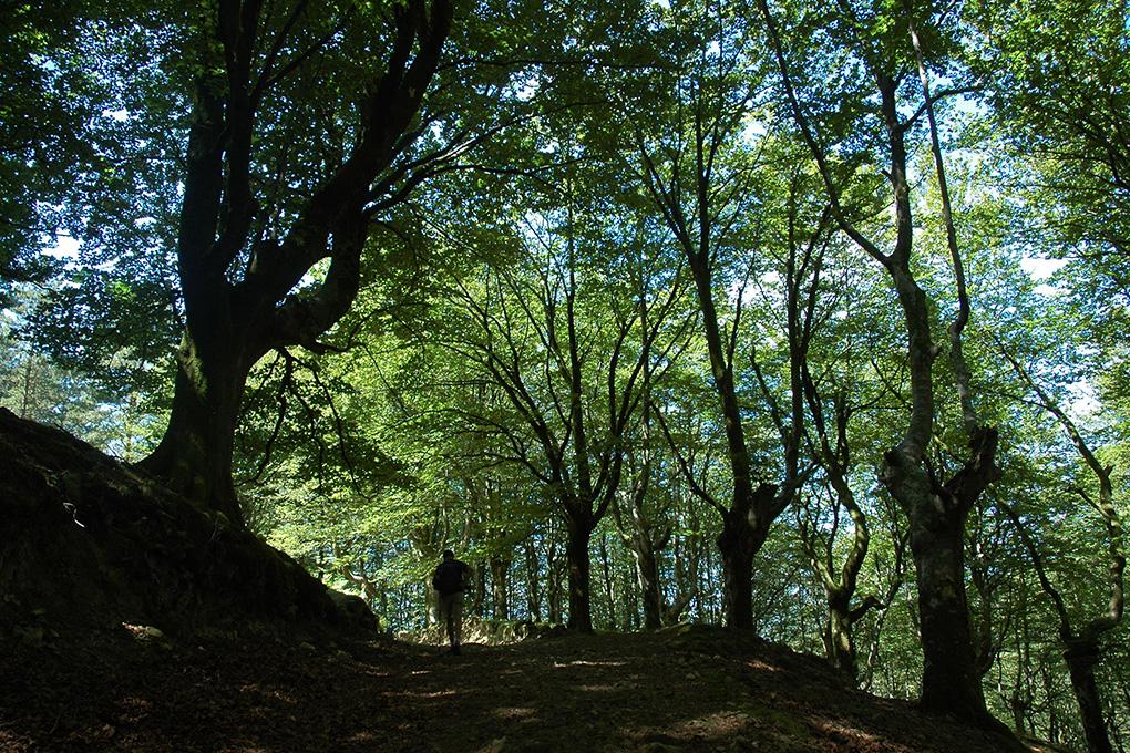 Sendero en el frondoso bosque de Irati. Fotos: Alfredo Merino y Marga Estebaranz.
