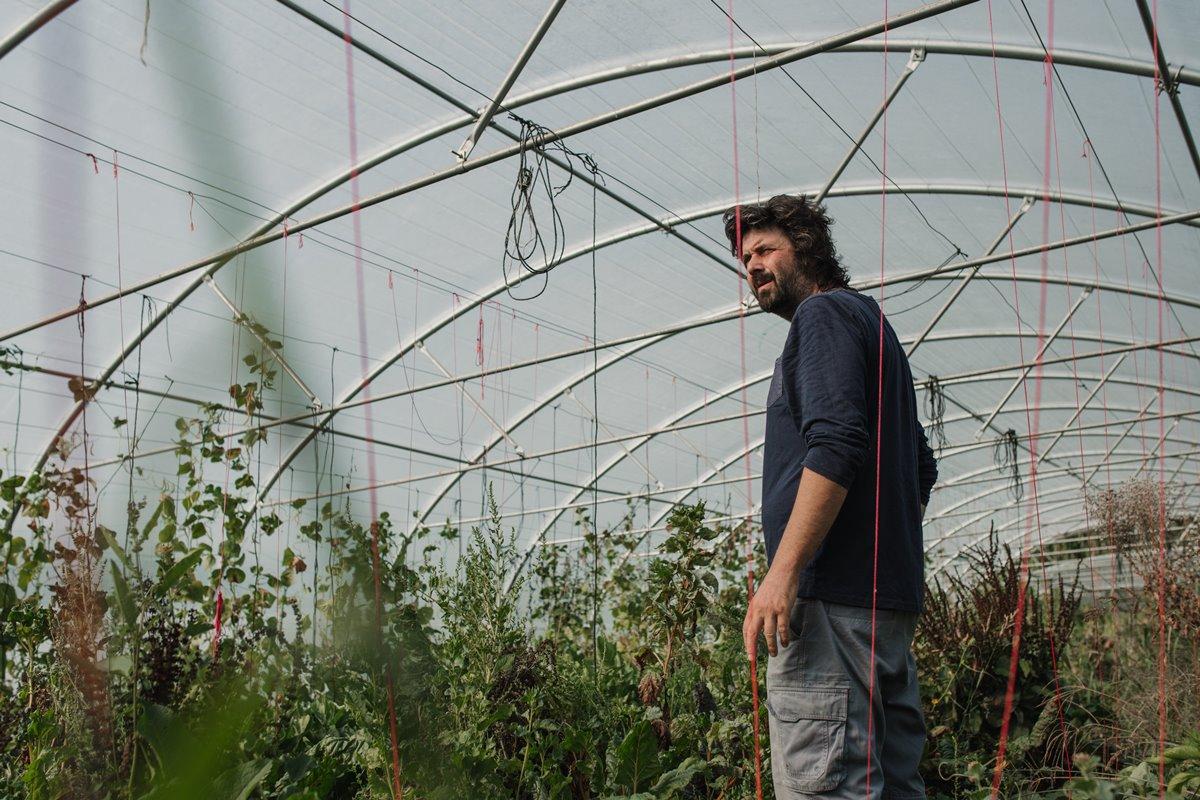 El cultivo de tomates es el más agradecido para Alberto Fernández.