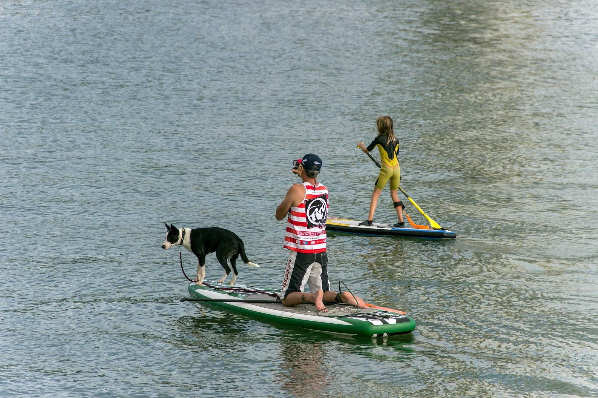 El 'paddle surf' es lo más indicado para principiantes en deportes de aventura con mascotas. Foto: Shutterstock