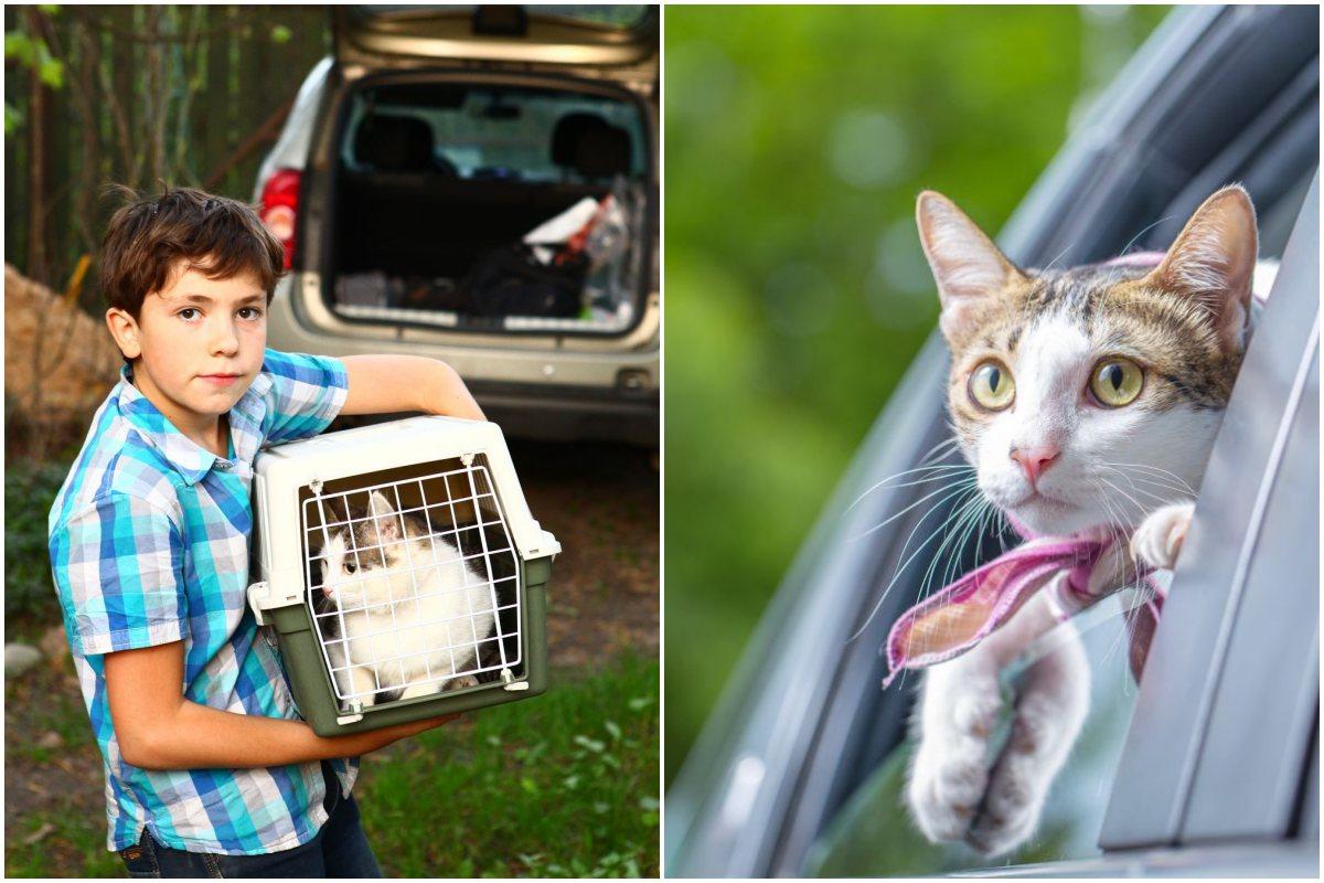 Antes de viajar con el gato en coche, es mejor habituarle con desplazamientos cortos. Foto: shutterstock
