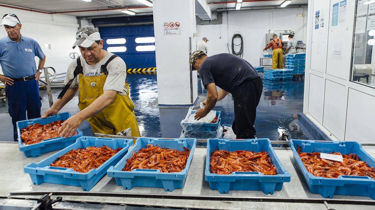 Los pescadores depositan la gamba roja recién pescada para su subasta.