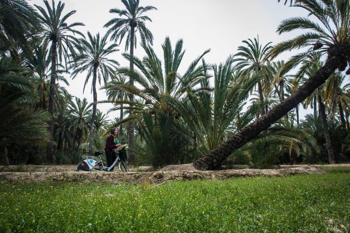 Mirando un palmera que crece inclinada en la Ruta de las Palmeras Singulares del parque de palmerasdel Filet de Fora, en Elche (Alicante).