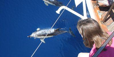 Delfines avistados desde la proa del Karyam. / Cedida por: Cetáceos & Navegación.