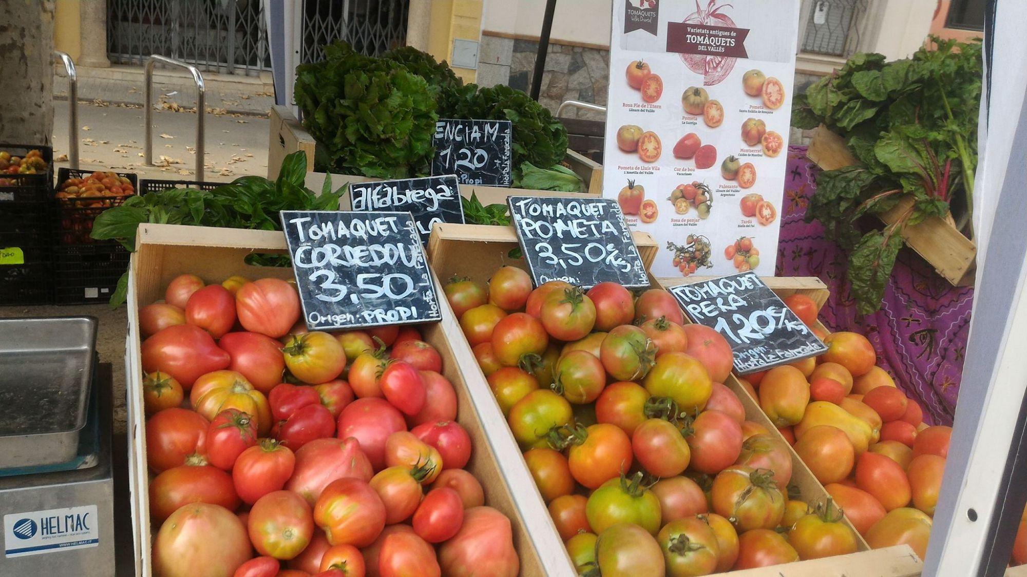 Tomates de Horta la Fanecada (Barcelona)