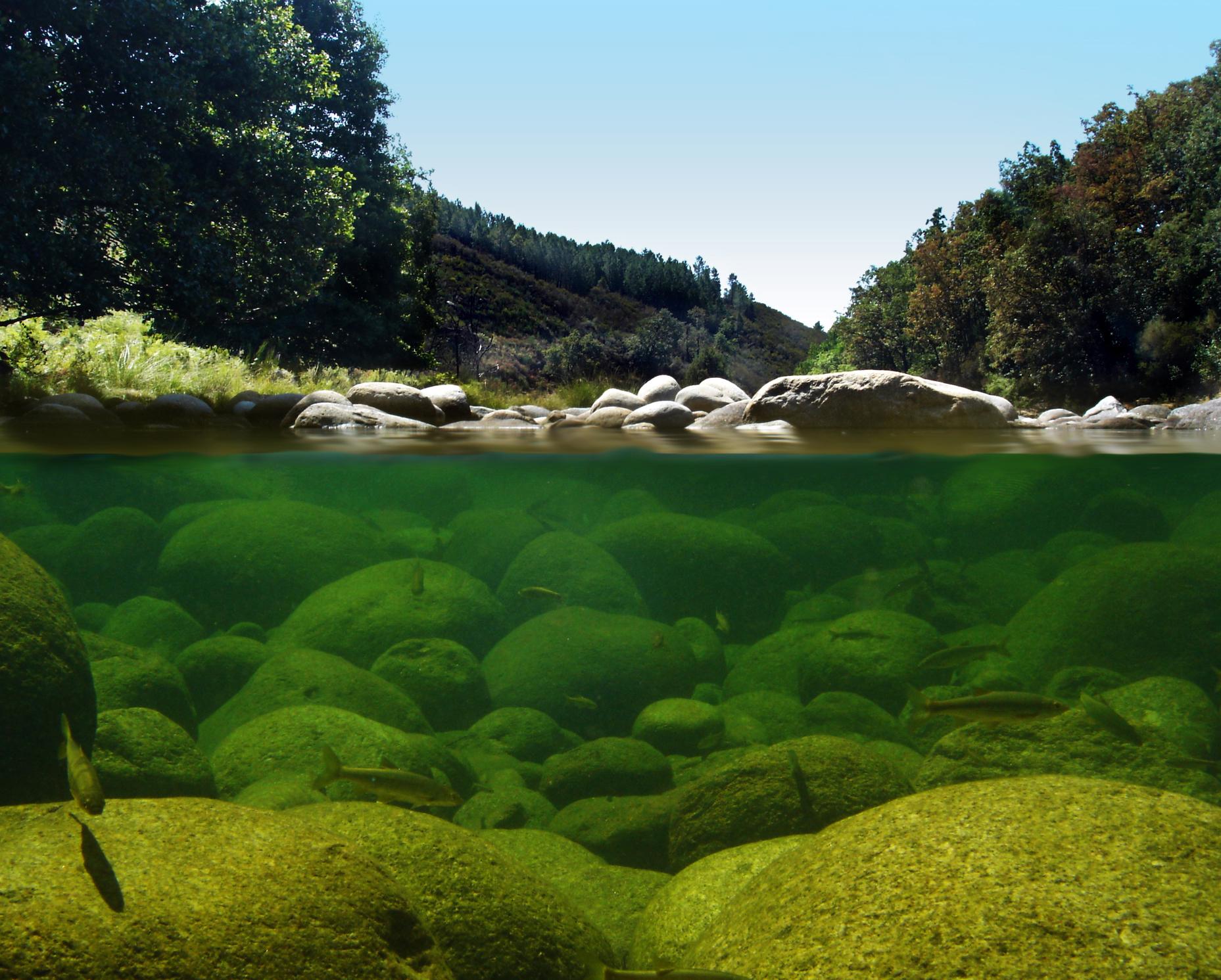 Los pececitos disfrutan del agua cristalina, en La Vera. Foto: Sergio Mestre.