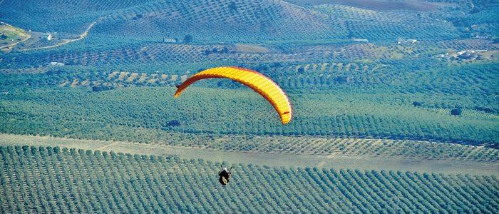 Prácticas de parapente sobre un campo de olivos.