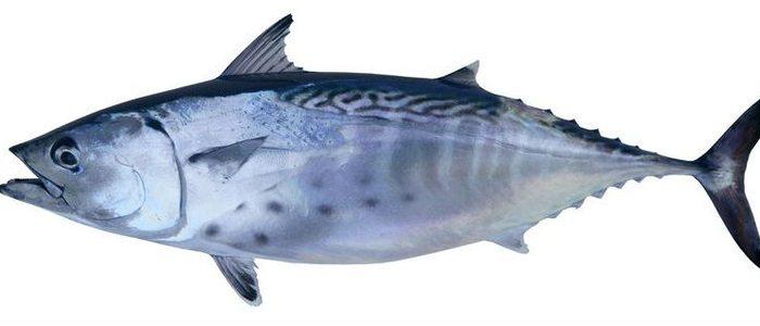 El atún es uno de los pescados más consumidos.