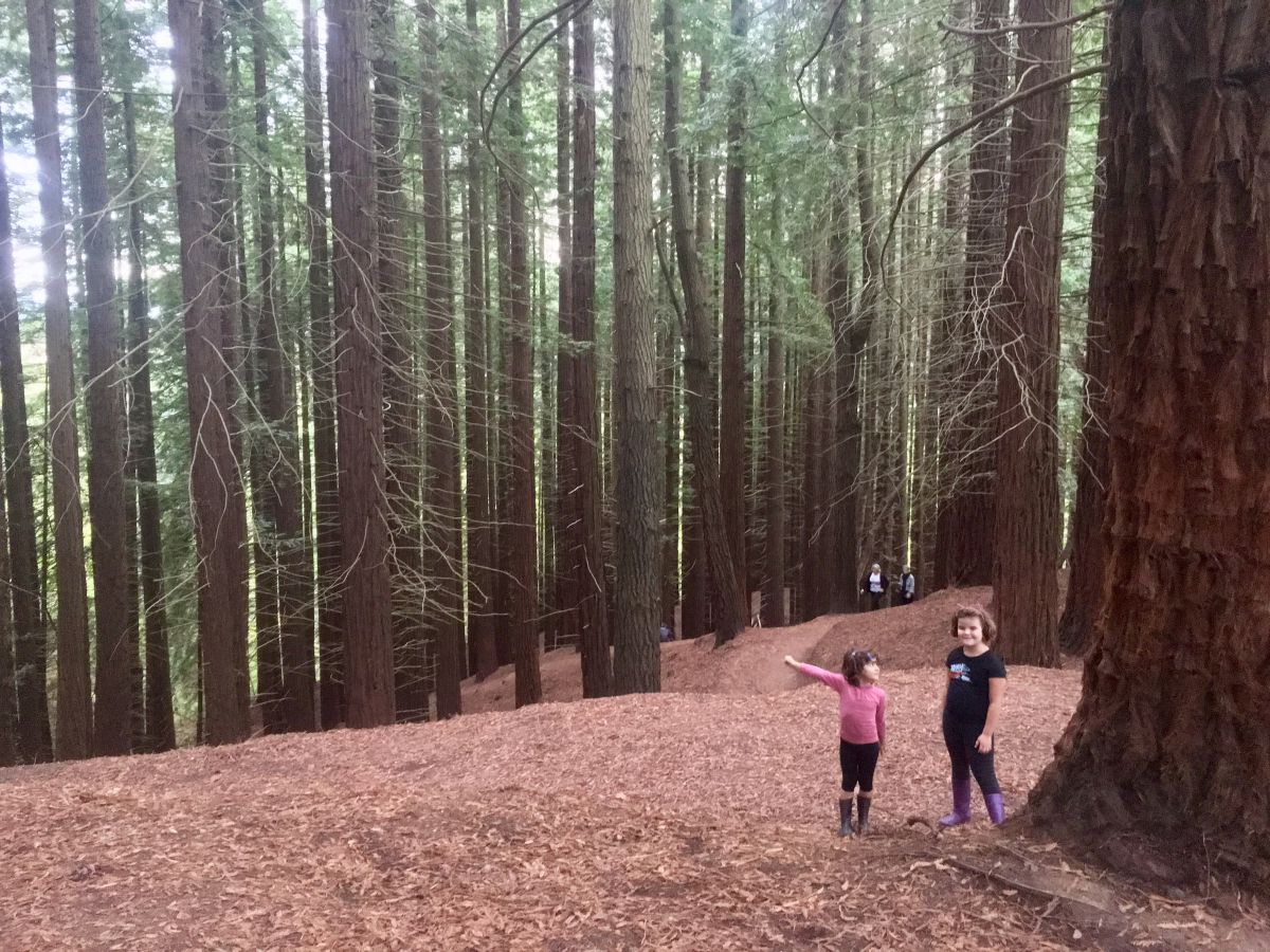 Unas niñas junto a las secuoyas en el Monumento Natural a las Secuoyas en Cantabria.