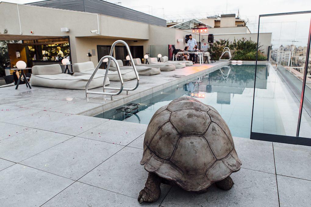 La tortuga, obra de Dirk Claessens, parece a punto de darse un buen baño.