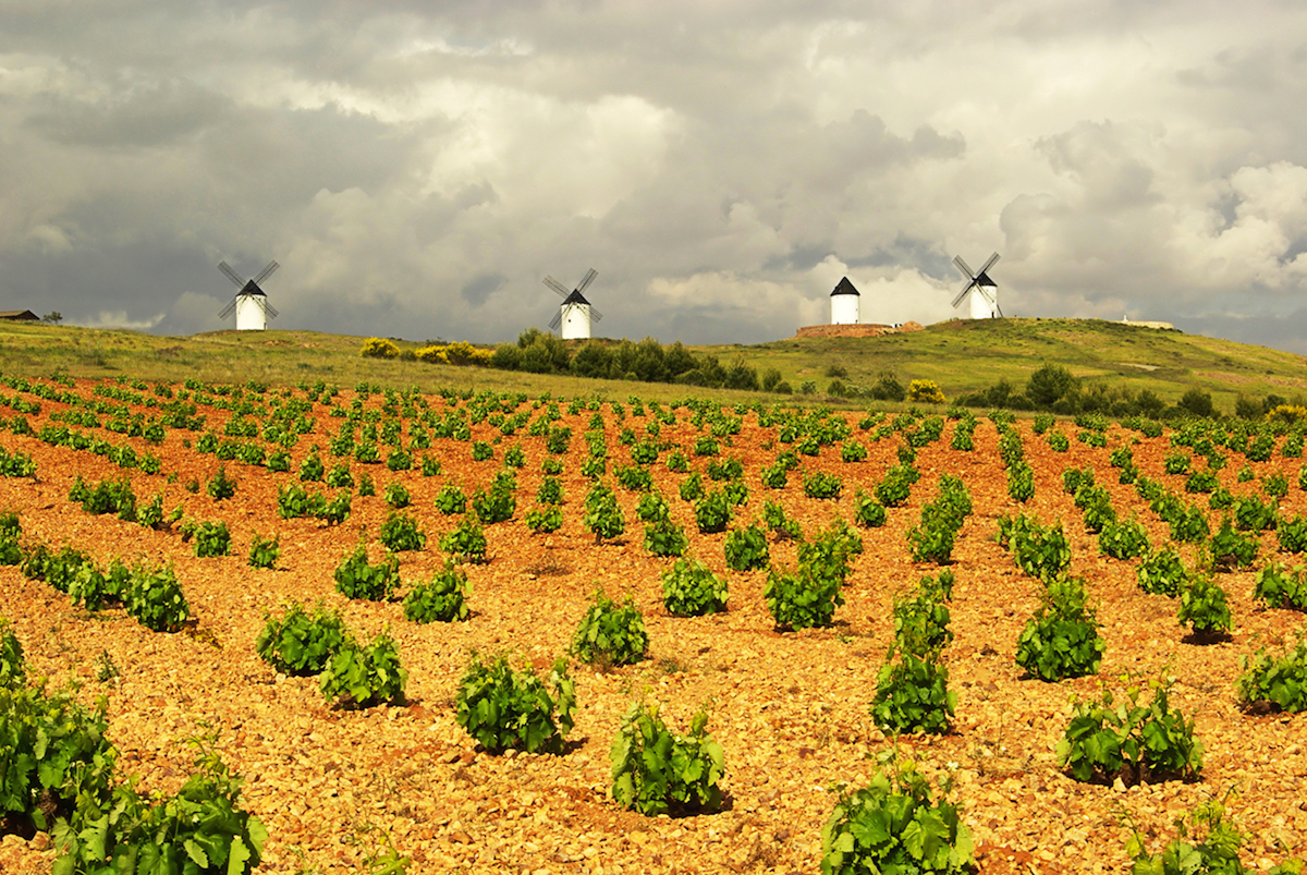 Viñedos y molinos de Castilla La Mancha