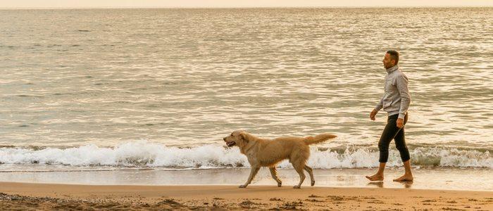 Existen playas con zonas acotadas donde podemos pasear tranquilamente con ellos.