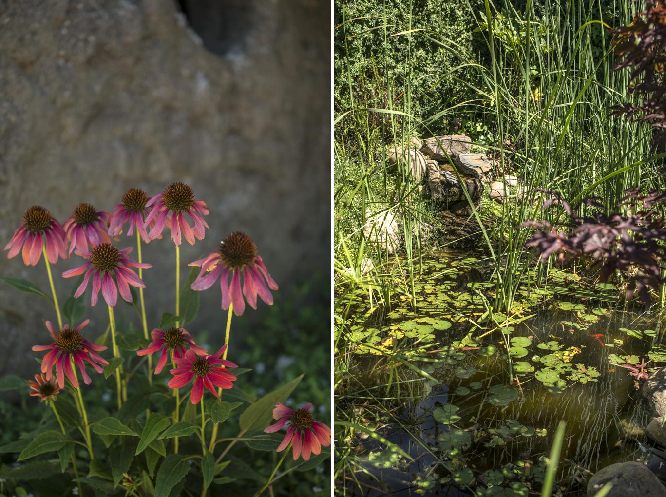 El estanque invita a recrearse en la belleza de la simplicidad.