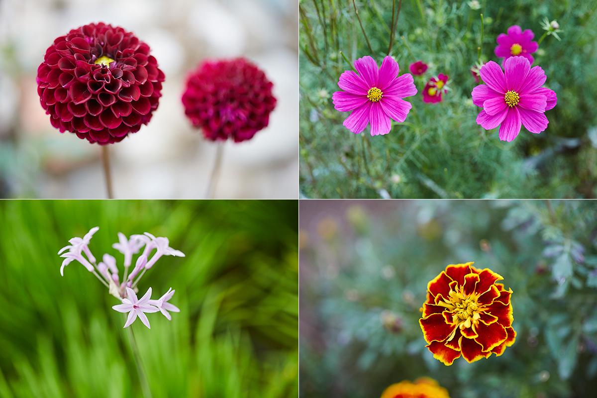 En el huerto, cerca de Barcelona, se llegan a cultivar unas 50 especies de flores comestibles.