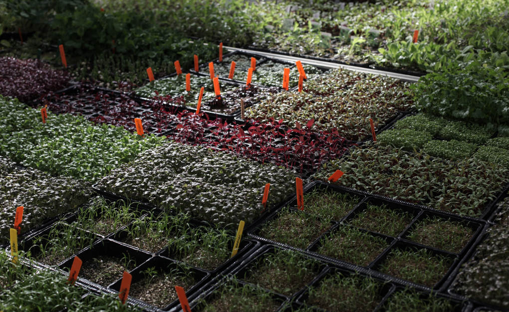 Semilleros para experimentar con todo tipo de plantas.