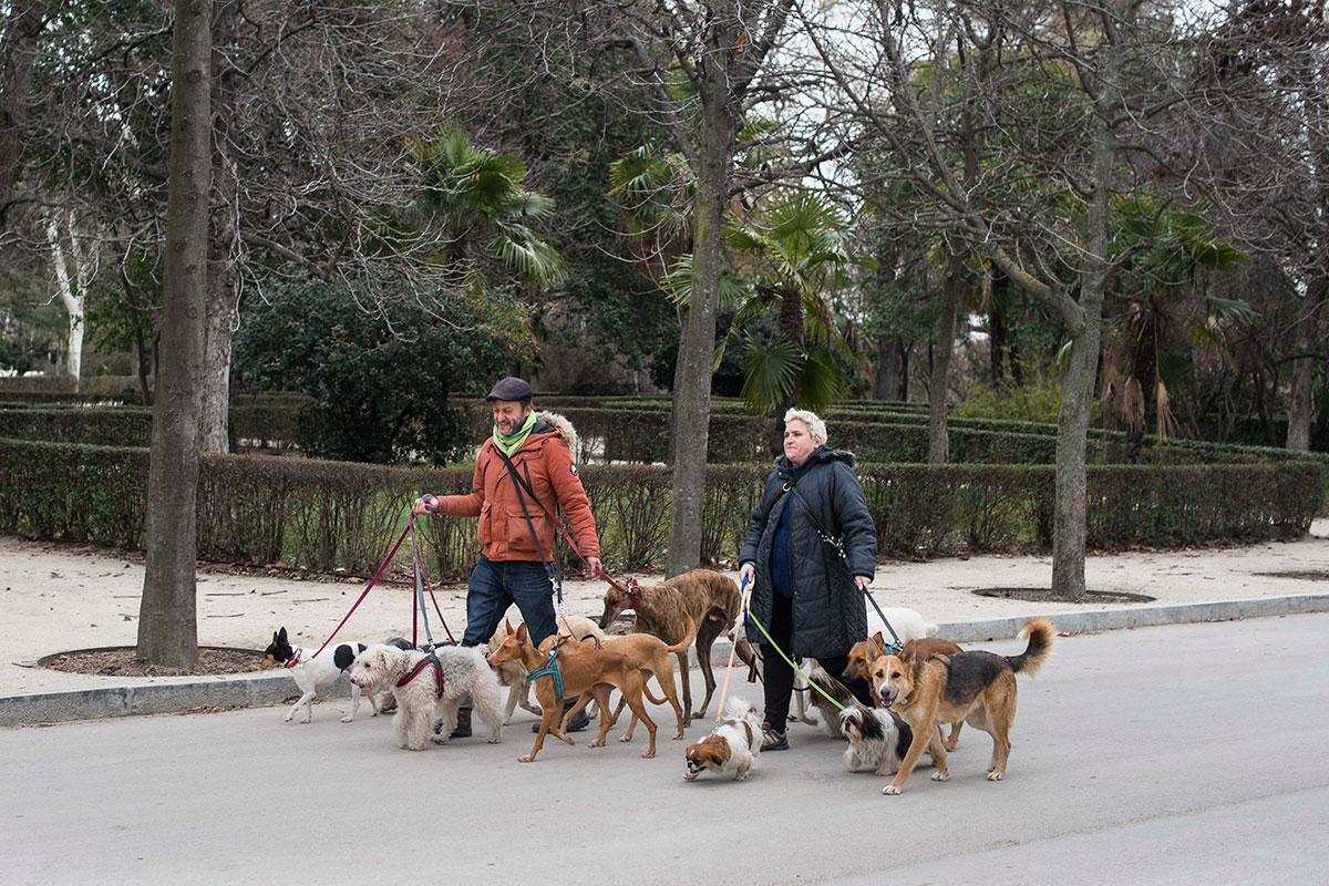 Paseadores de perros en el parque, que se ha convertido en un paraíso para algunos animales.