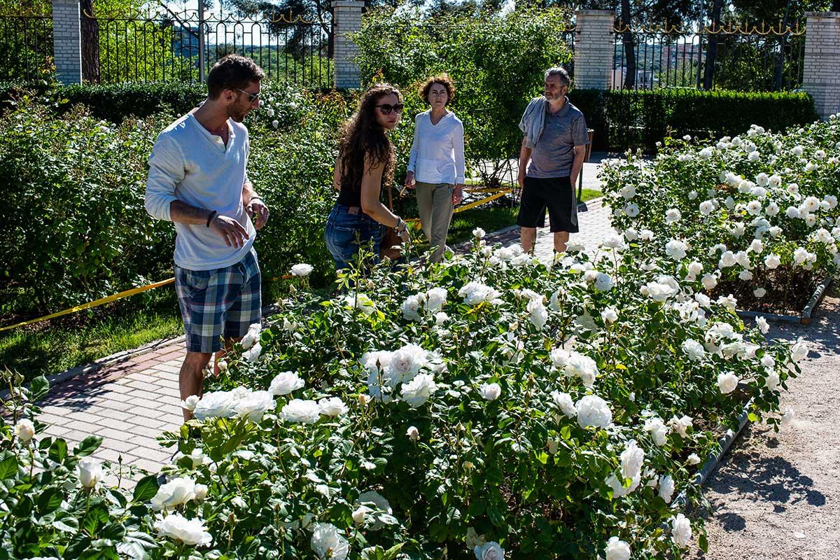 Los turistas pasean y observan unos rosales de color blanco en La Rosaleda, en el Parque del Oeste, Madrid.