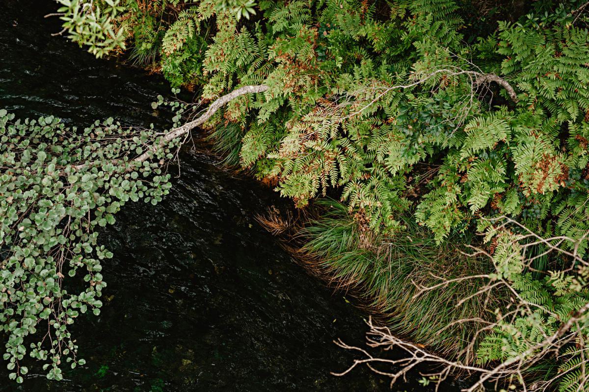 Helechos del Periodo Terciario (justo después de los dinosaurios) se asoman al río Eume.