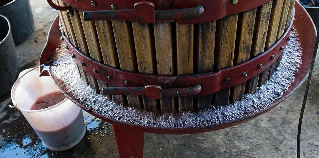 Zumo de uva tras el prensado.