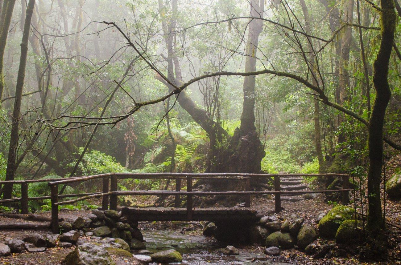 Parque Nacional Garajonay: nieblas