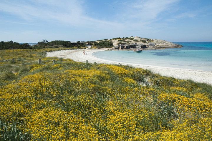 ¿Ses Illetes o un cuadro impresionista? La mejor playa de Europa. Foto: Jorge Jímenez, Facebook Turismo Formentera.