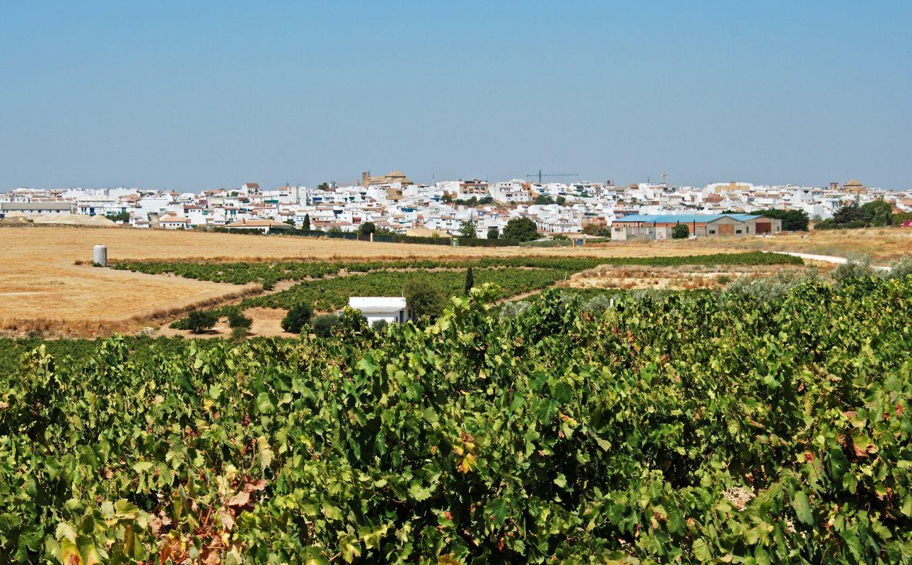 Montilla, abrazada por la viñas de la D.O. Montilla-Moriles. Foto: Shutterstock.