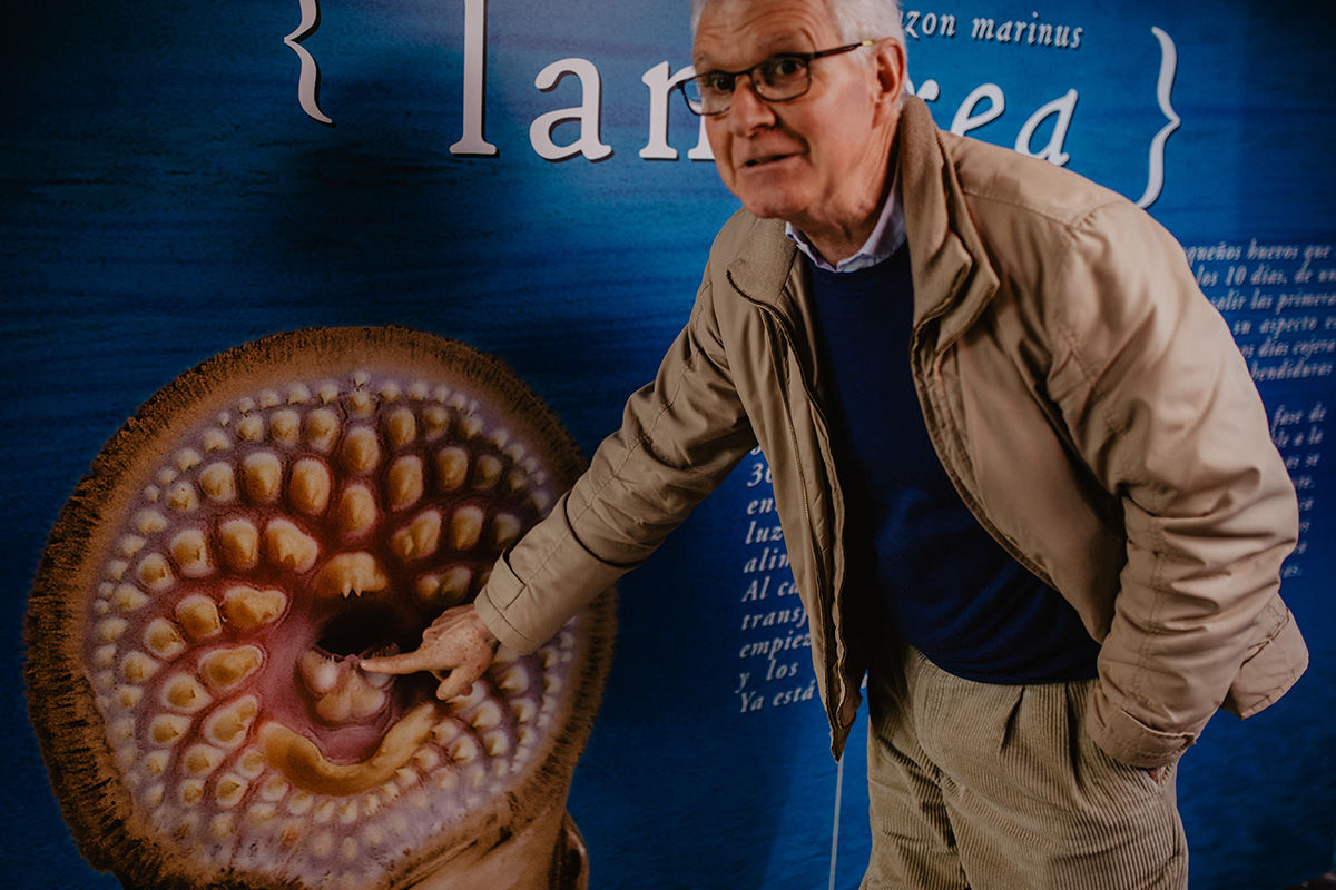 Guillermo nos señala la bonita boca de la lamprea.