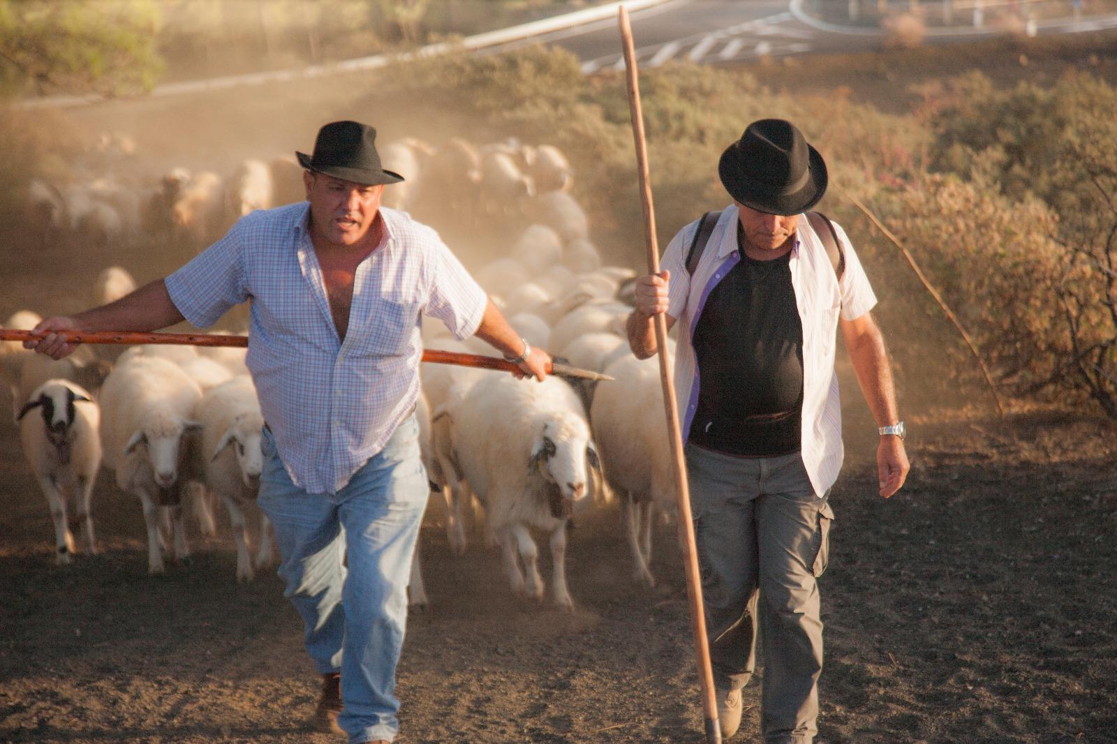 Durante la trashumancia, Cristóbal se hace acompañar de otros pastores y algunos amigos. Foto: Isidoro Jiménez (cedida).