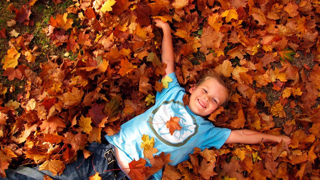 Hojas, hojas y más hojas. ¡A jugar! Foto: Shutterstock
