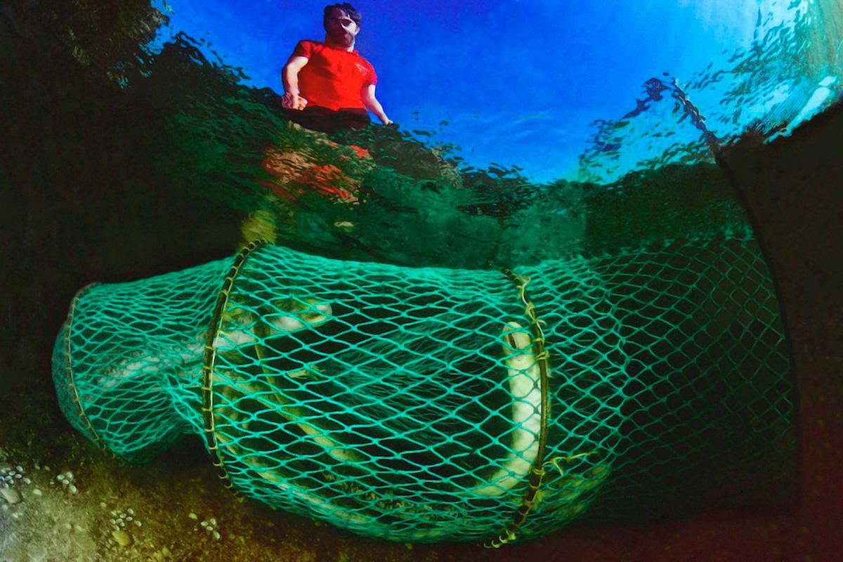 Pescando lamprea en el río Miño. Foto: Age Fotostock