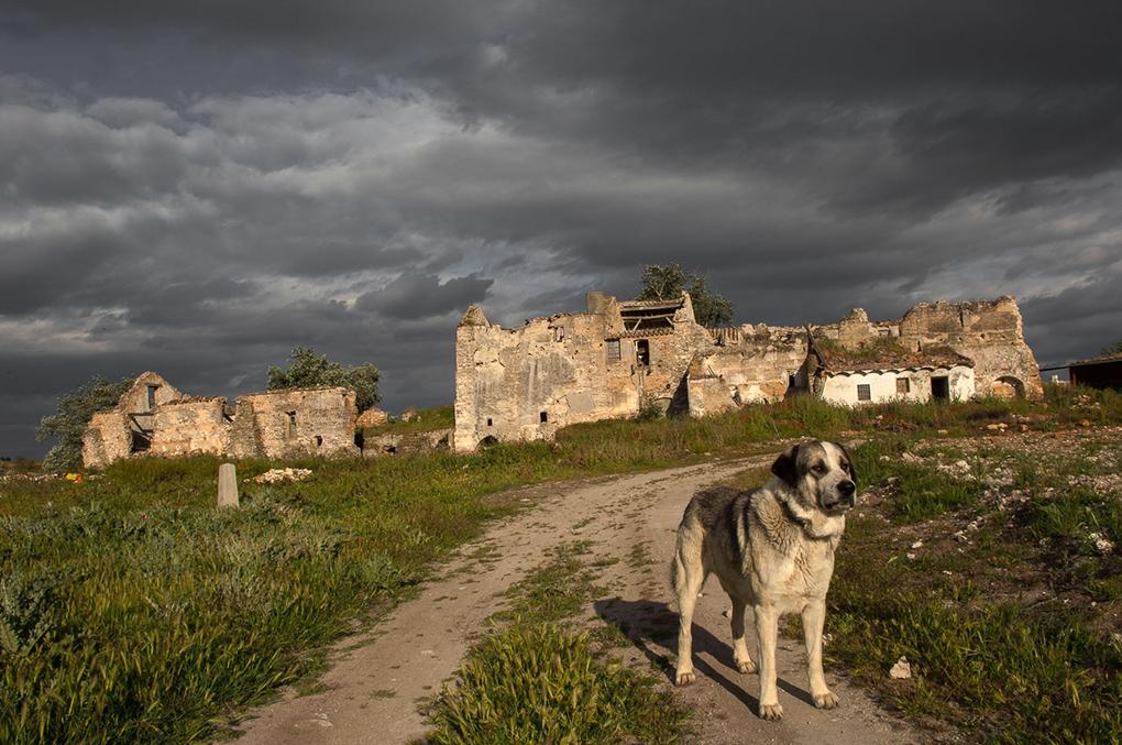 El molino cuenta con un fiel guardián que no lo abandona ni en su ruina.