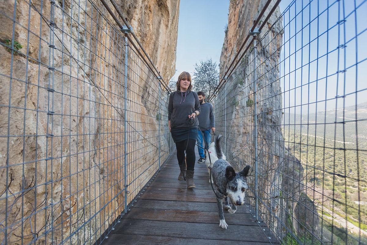 Lleva algún premio para tu can por si se asusta en el puente de madera.