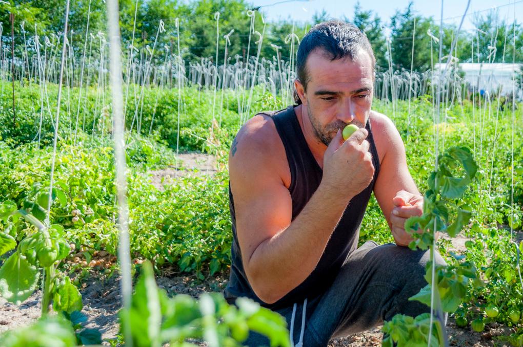 Si nos enchilamos, el tomatillo es de gran ayuda para aliviar el picor. Foto: Beto Troconis.