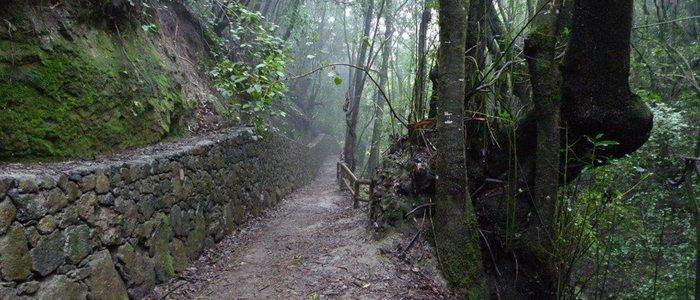 Ruta Guardianes Centenarios. Foto: Turismo de Tenerife.