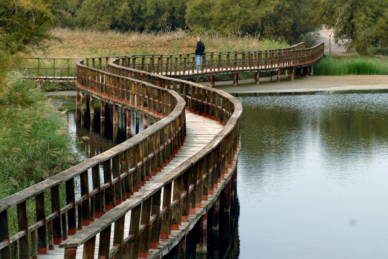 Parque Nacional Daimiel: paseo por el puente