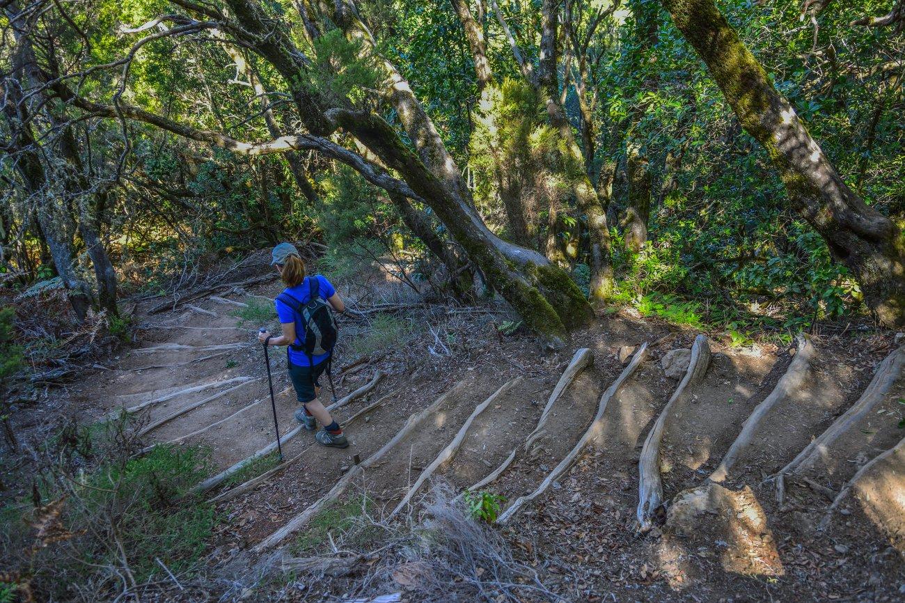Parque Nacional Garajonay: senderista