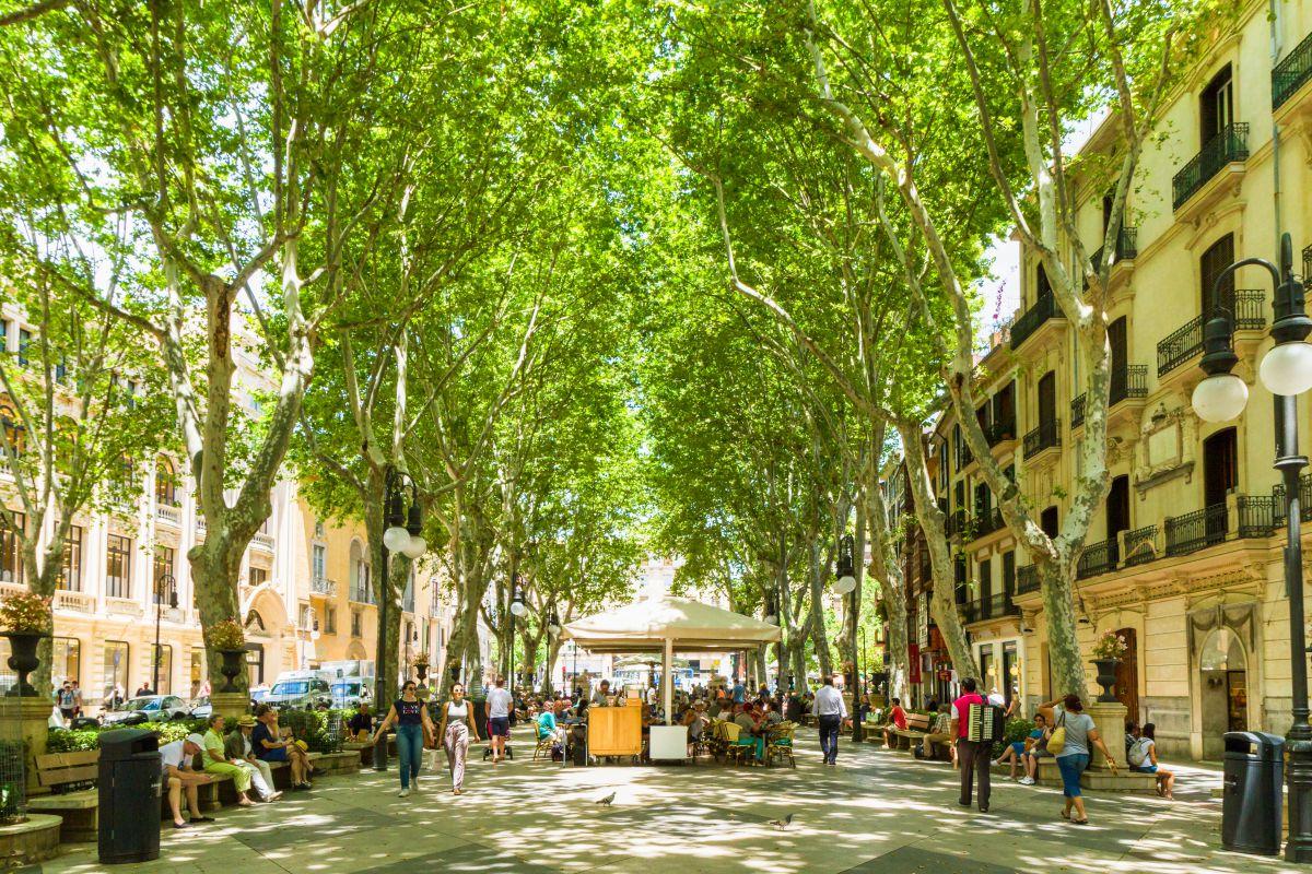 El relajado Paseo del Borne, en el centro de Palma. Foto: Shutterstock.