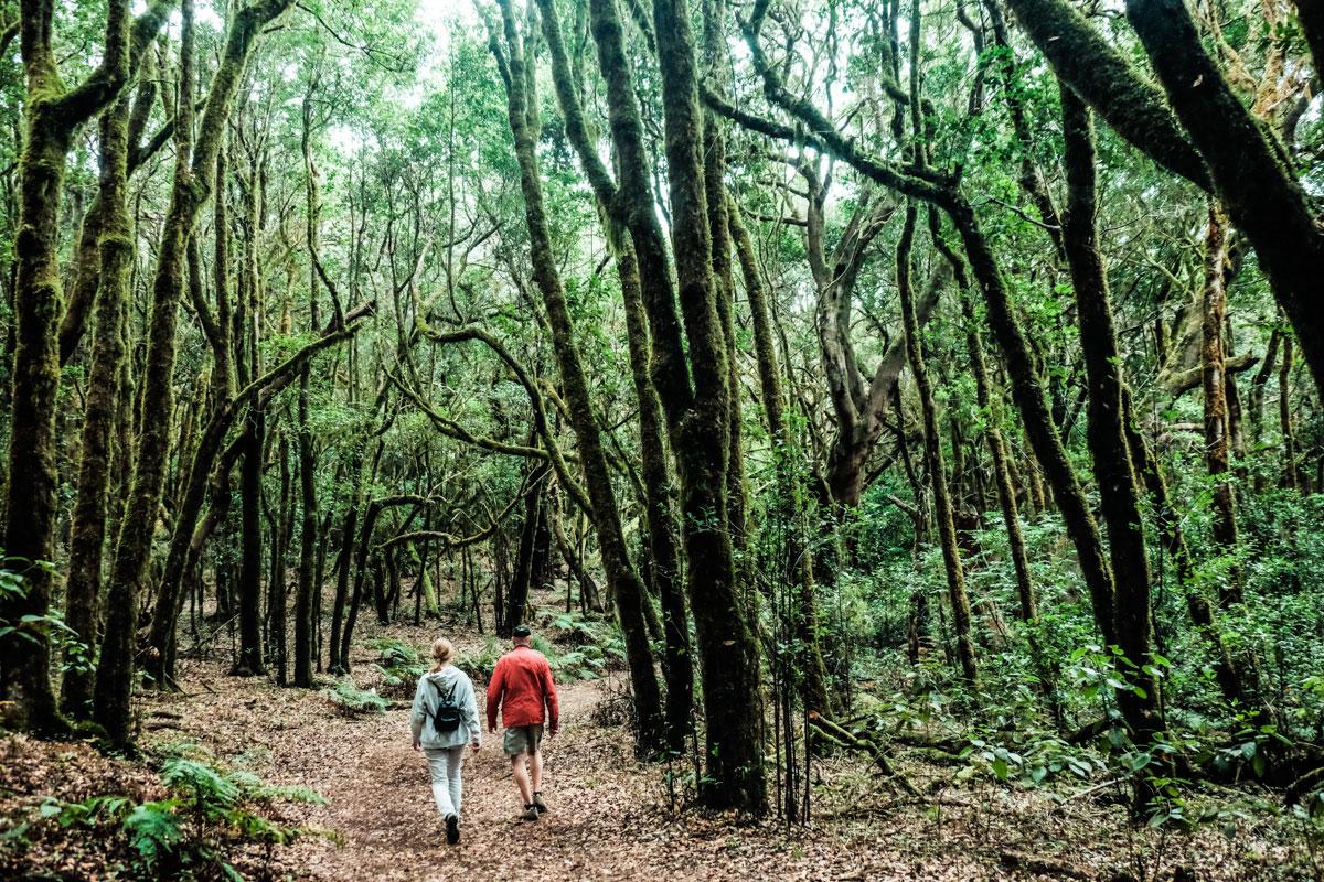 La Gomera: Sendero en el Parque Nacional de Garajonay. Foto: Hugo Palotto