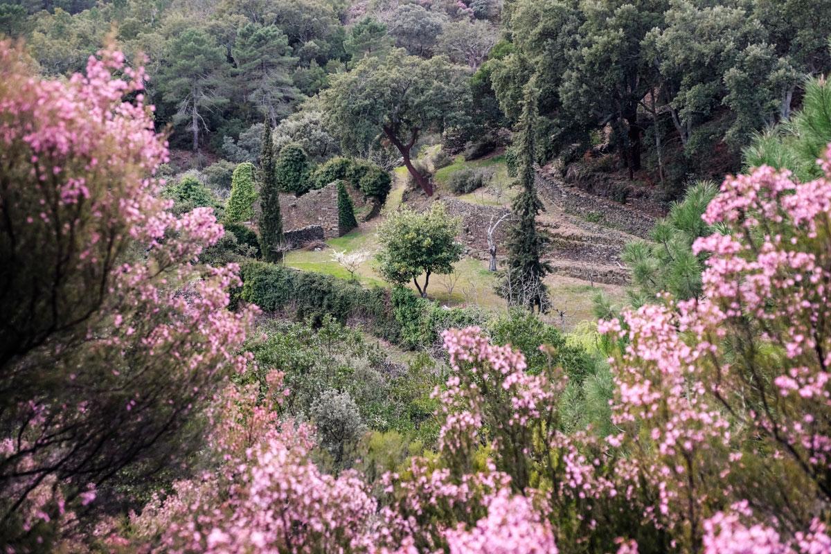 El entorno de Las Hurdes resplandece en primavera.