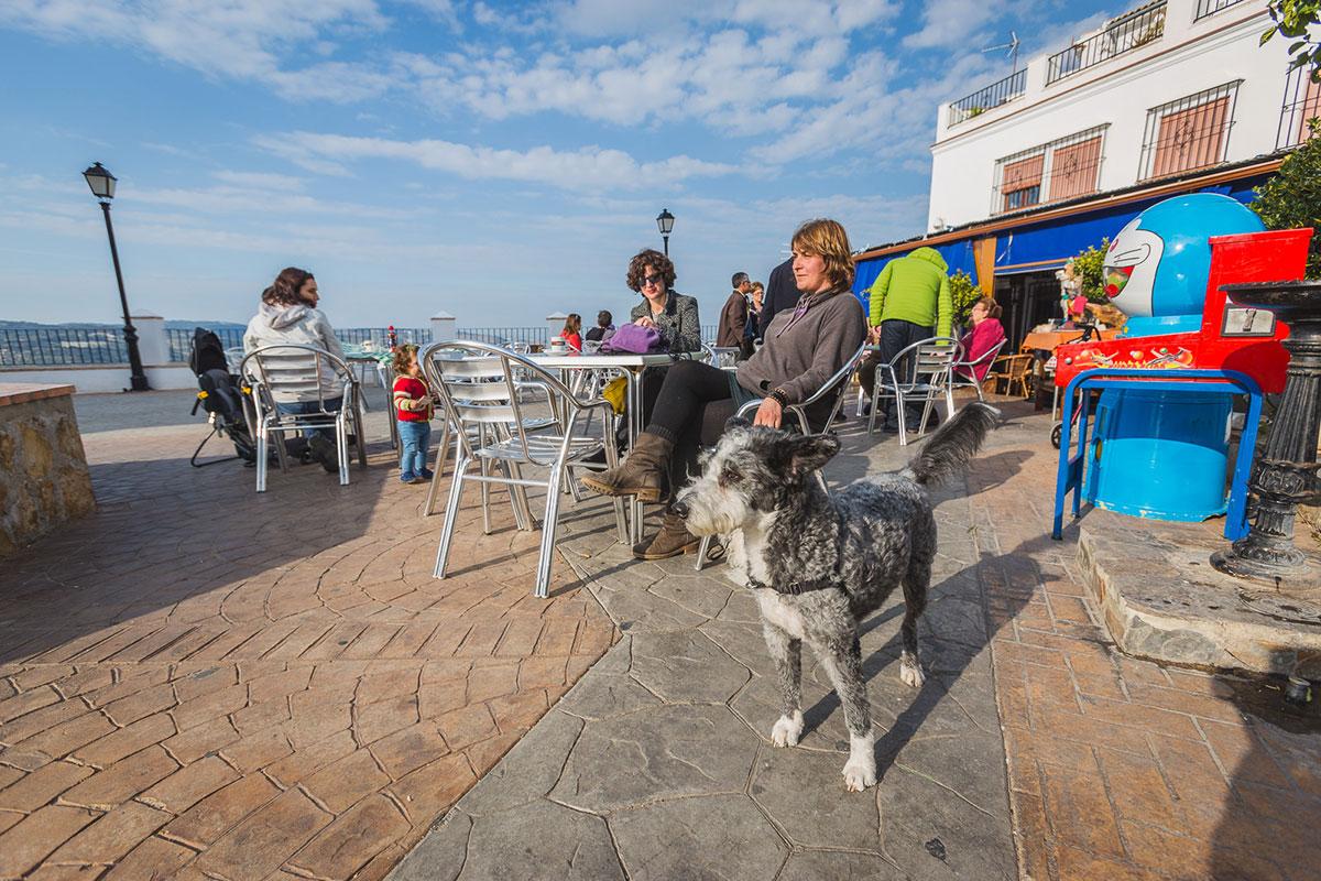Sentarte en una terraza, aprovechar el sol, tomarse el aperitivo... y todo, con tu mejor amigo.