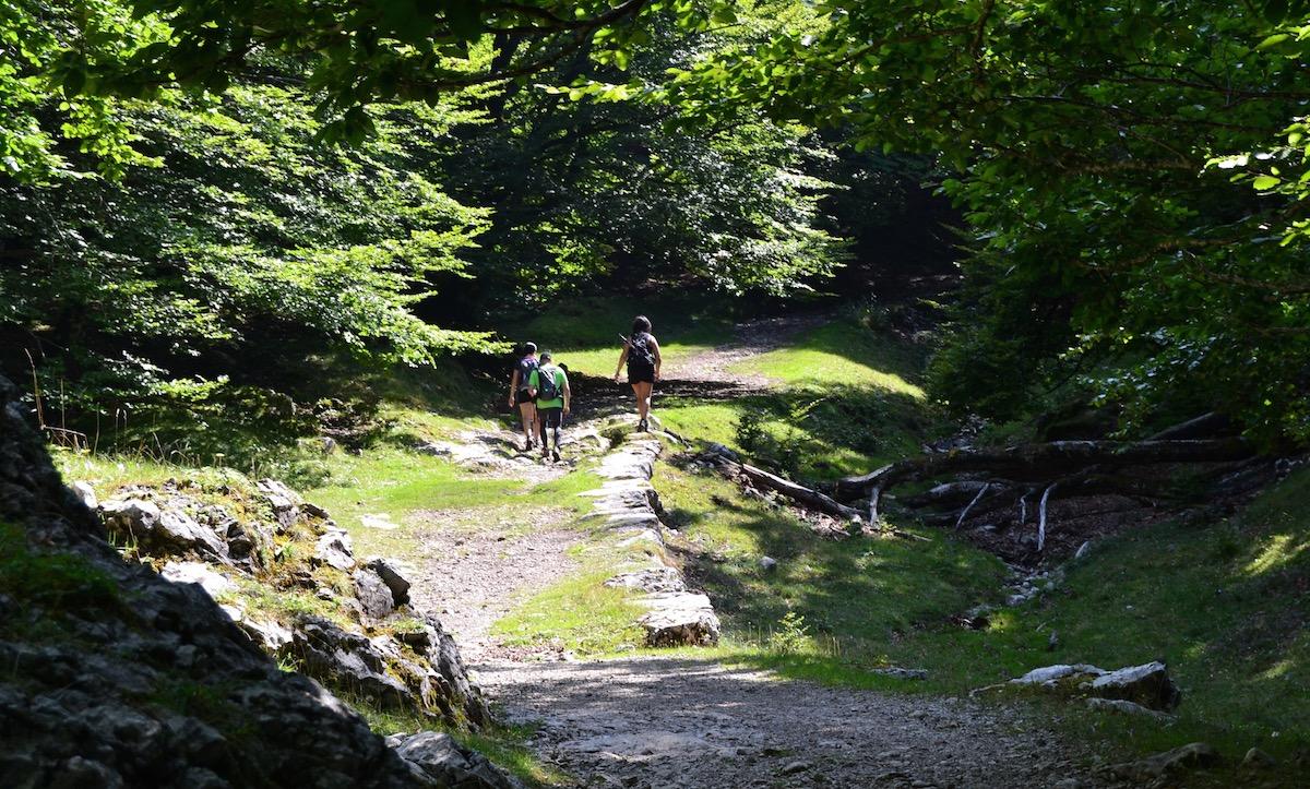 La calzada del siglo XI que lleva a la cueva de San Adrián, puro misticismo verde.
