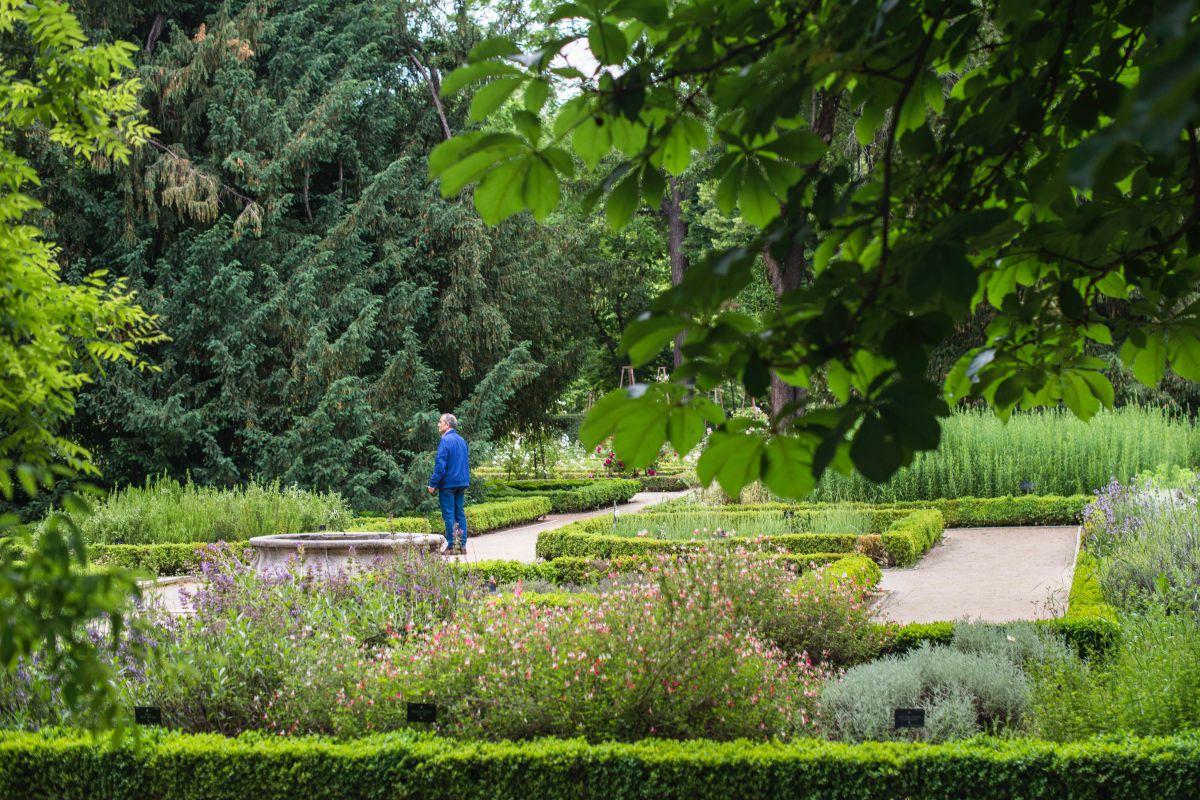 Un hombre pasea por el interior del Real Jardín Botánico de Madrid.