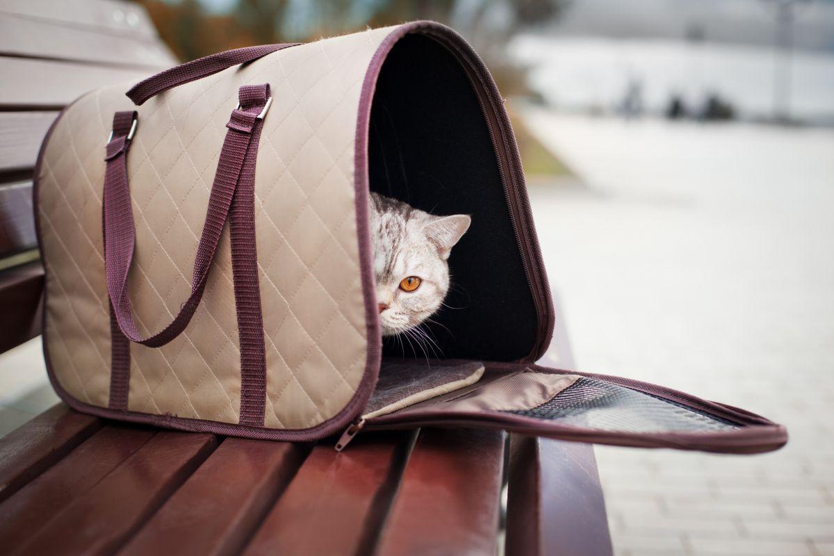 El transportín debe ser homologado y tan grande como para que el felino pueda tumbarse y ponerse de pie. Foto;: shutterstock