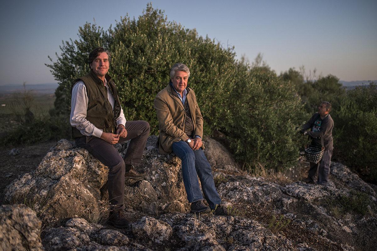 Luis estudió Económicas y Paco, Arquitectura; hoy son dos enamorados del olivar y del acebuche.