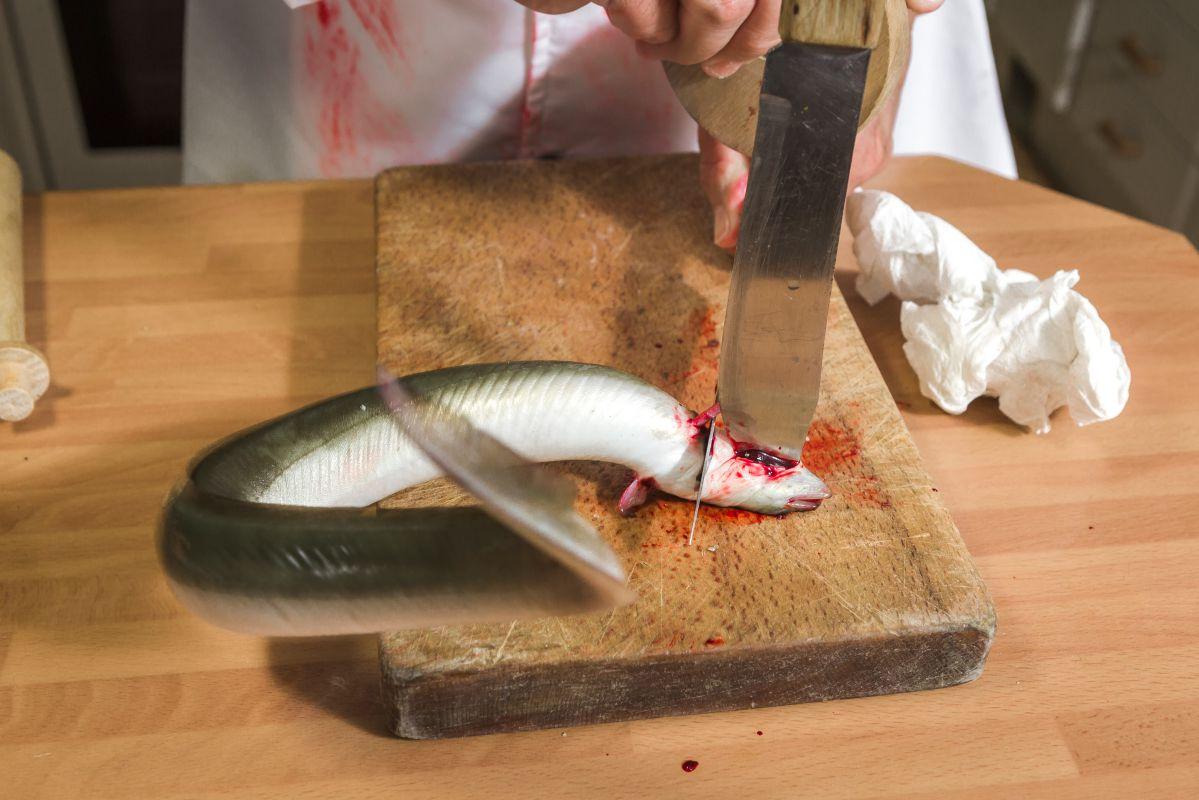 Sacrificando la anguila.