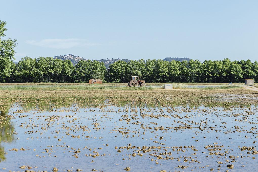 Pals cuenta con una veintena de payeses de arroz, dos molinos y tres marcas comerciales.