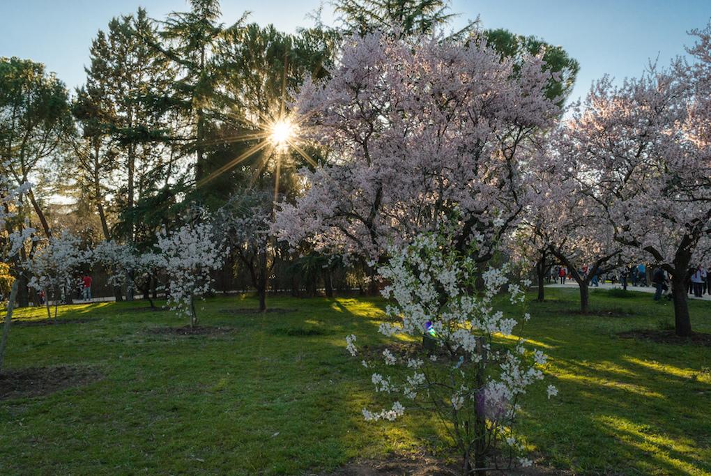 Almendros en flor en el Parque Quinta de los Molinos. Foto: Kus Cámara (CC)