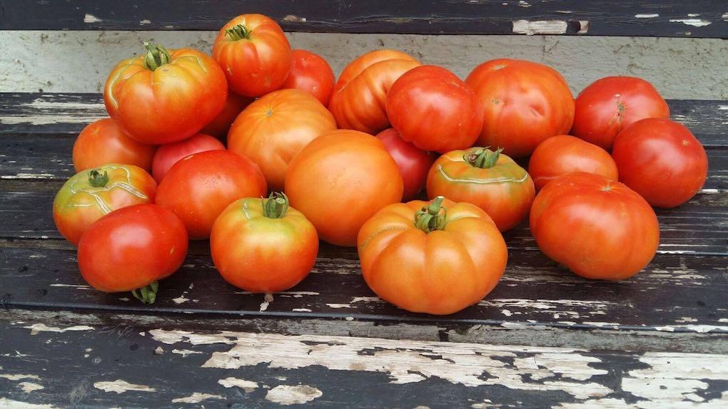 Temporada de tomates en 'La Huerta de Tudela'. Foto: Facebook.