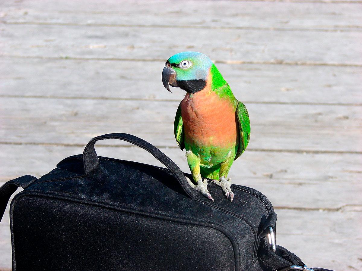 Las aves se estresan muchísimo en los viajes. Foto: shutterstock.