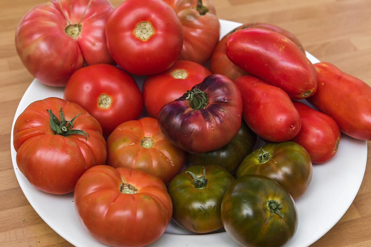 Distintas variedades de tomate